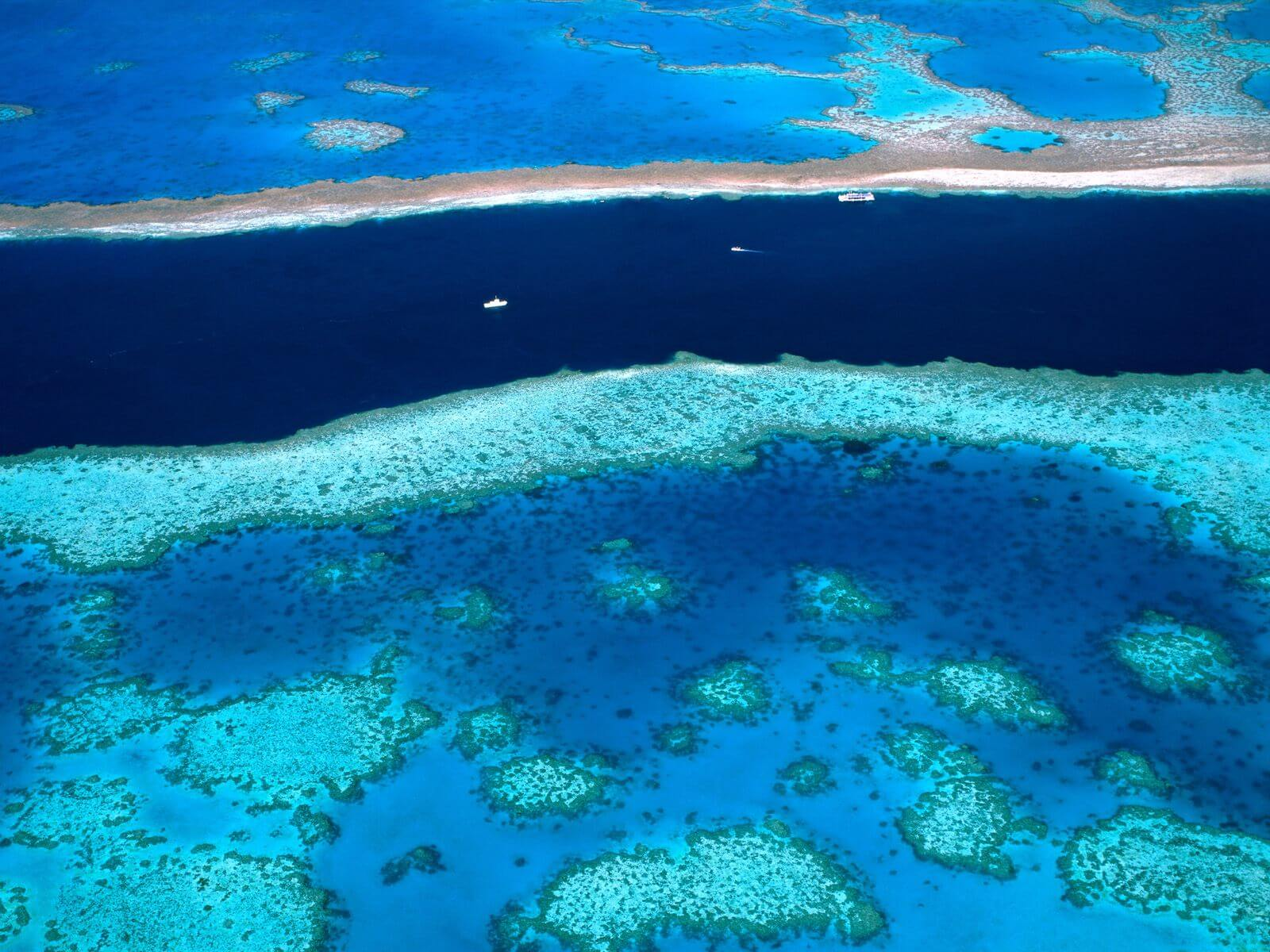 coral reef and great barrier reef A study measuring the extent of coral bleaching along the great barrier reef is branding some of the northern reef's problem as extreme.
