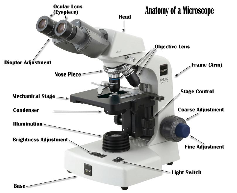 Size By Size Microscopy Optical Mineralogy Best Portable Microscope