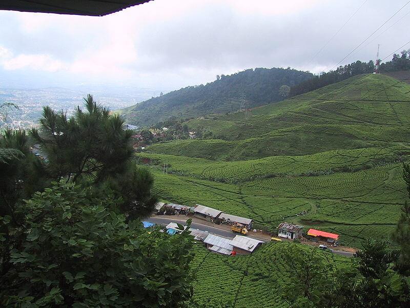 800px Puncak West Java