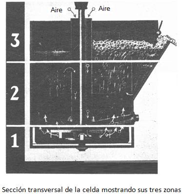 Seccion transversal de la celda mostrando sus tres zonas