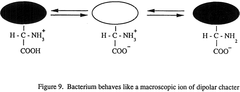 flotation-macroscopic-ion