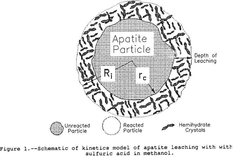 leaching-of-apatite kinetics model