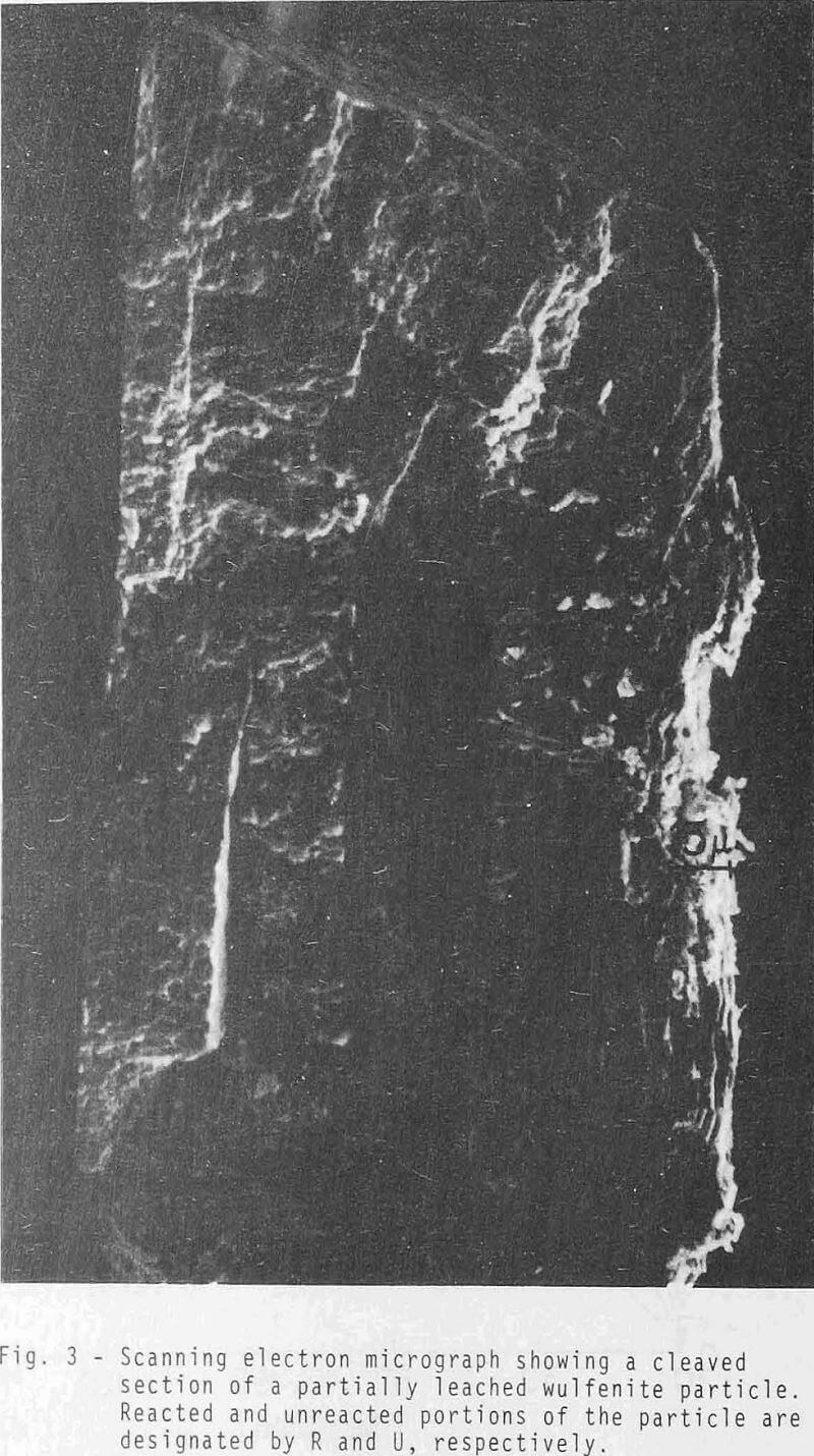 Sulfide Ion Leaching Kinetic of Wulfenite