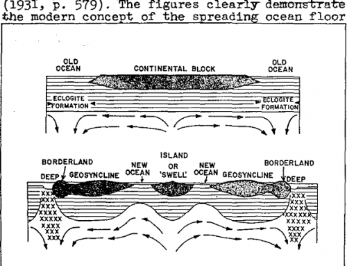 Mantle Cells and Mineralization